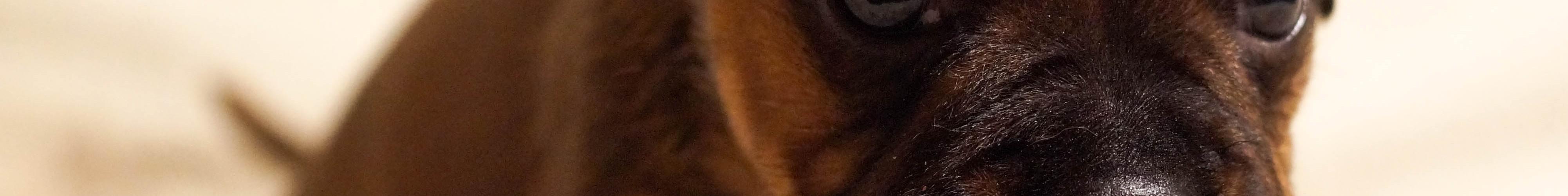 mb Hund Lebenskrise